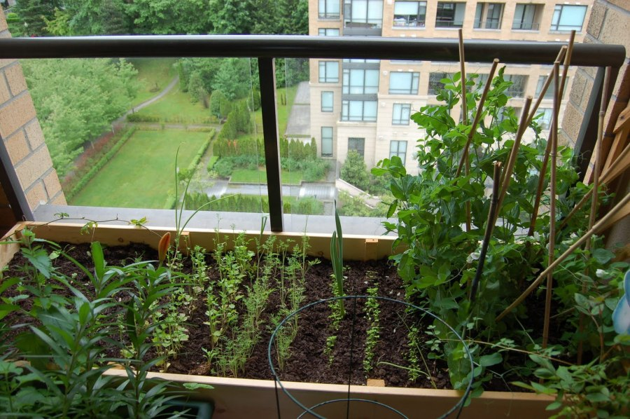 Сад огород на балконе и подоконнике. фото.