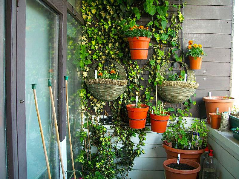 Зимний сад на лоджии фото