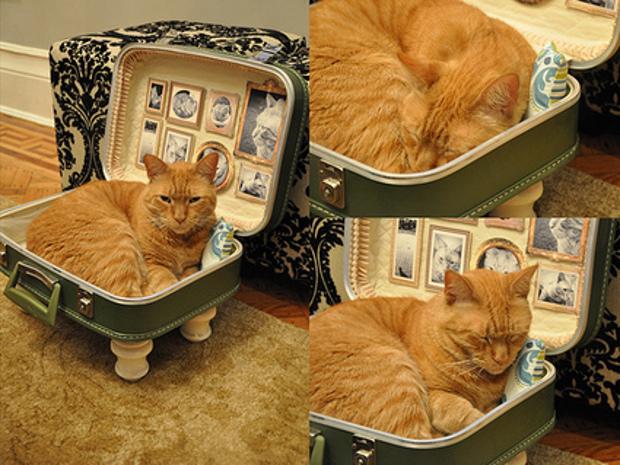 Игры кошка и кот и дом
