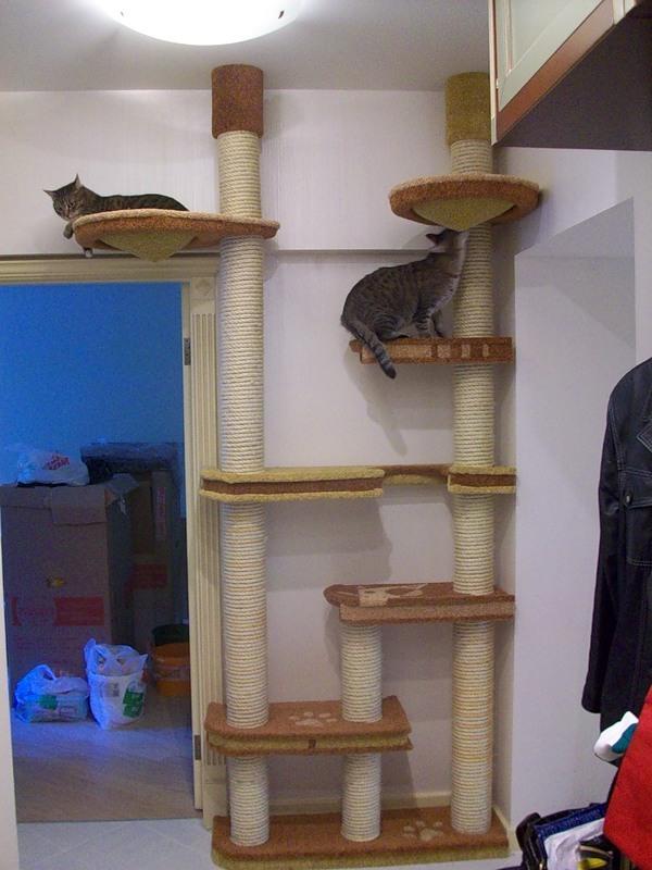 Дом для 2 кошек своими руками - Nationalparks.ru