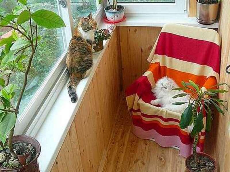 Кот кошка на балконе в вашем доме.фото. идеи.